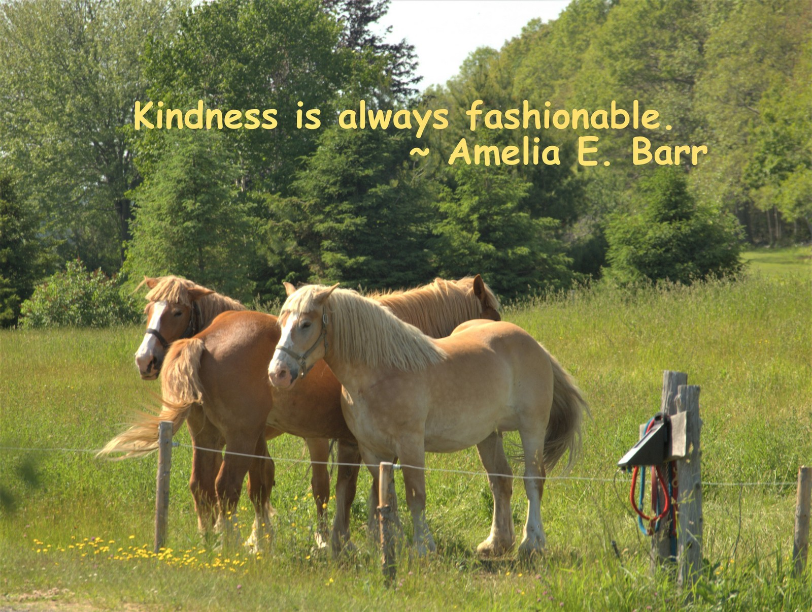kindness-is-always-fashionable