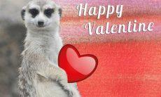 valentine-we-meet.jpg